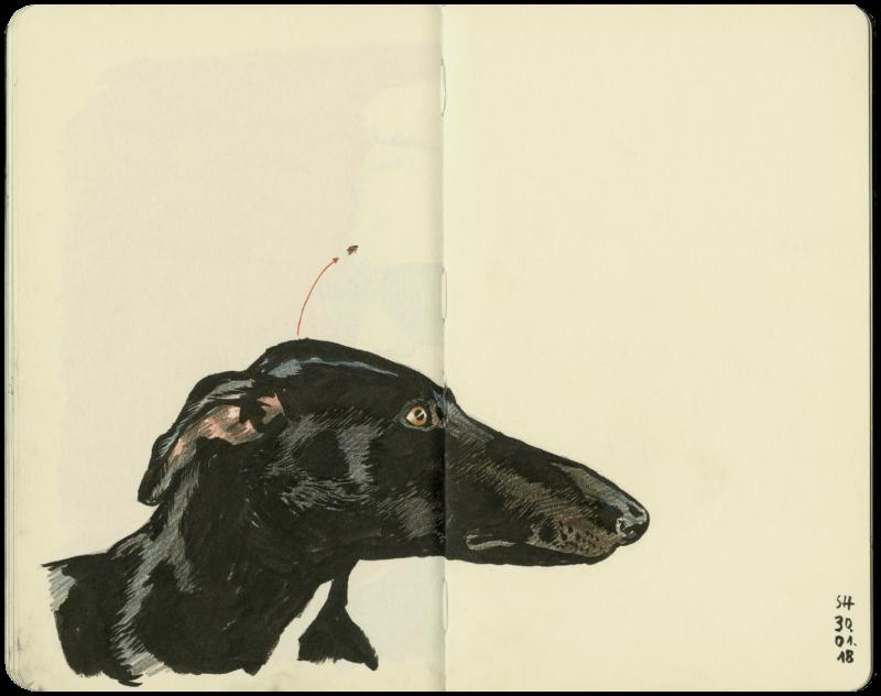 Kopf eines Windhundes mit einem Floh