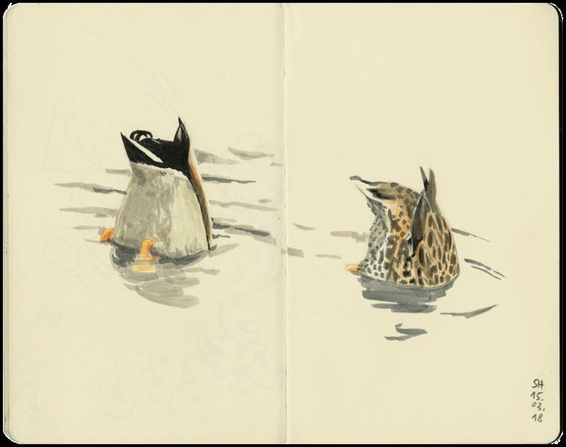 Zwei Enten im Teich