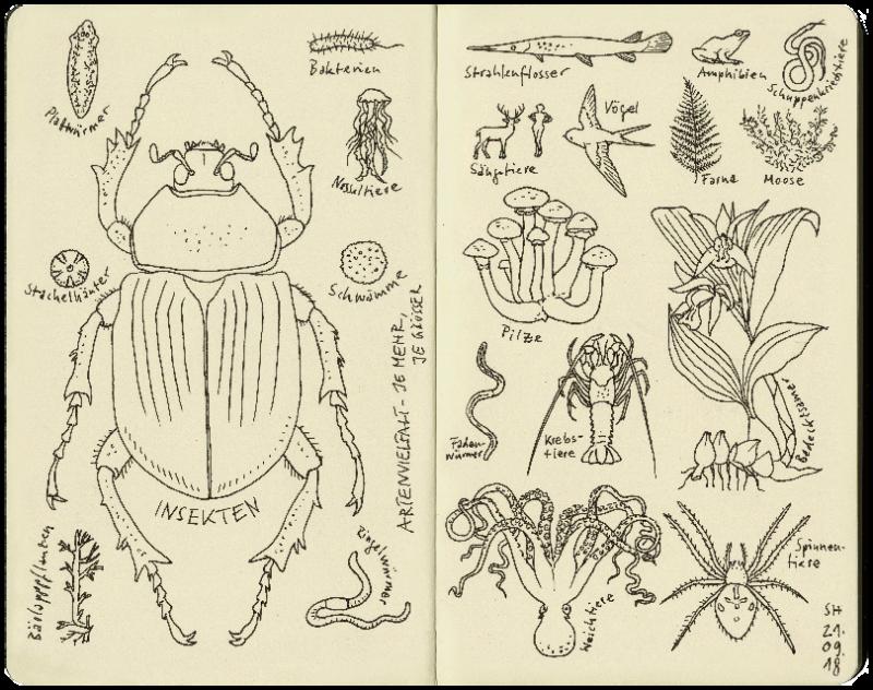 Darstellung der Arten auf der Erde mit Grösse nach Vorkommen